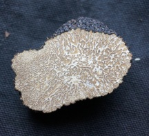 summer-truffle_