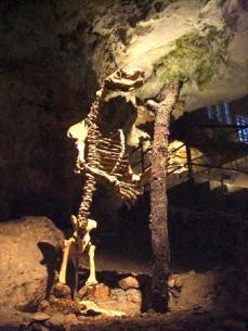 ph. Grotta Gigante - Prehistoric Cave Bear