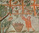 Vinalia celebration: Vintage at Cherchell Roman mosaic
